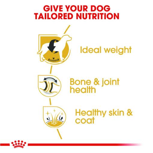Labrador 02 - Royal Canin - Breed Health Nutrition Labrador Adult
