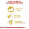 PERSIAN ADULT 03 1 - Royal Canin - Feline Breed Nutrition Persian