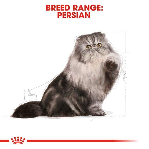 PERSIAN ADULT 06 - Royal Canin - Feline Breed Nutrition Persian