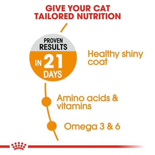 hair Skin 5 - Royal Canin - Feline Care Nutrition Hair & Skin