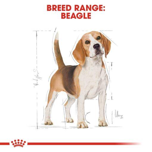 rc bhn beagle cv eretailkit 1 - Royal Canin - Breed Health Nutrition Beagle Adult