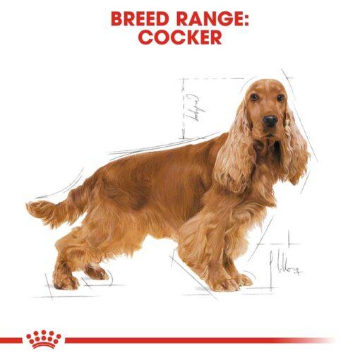 rc bhn cocker cv eretailkit 1 - Royal Canin - Breed Health Nutrition Cocker Adult