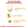 rc bhn cocker cv eretailkit 3 - Royal Canin - Breed Health Nutrition Cocker Adult
