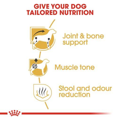 rc bhn dachshund cv eretailkit 3 - Royal Canin - Dachshund Adult
