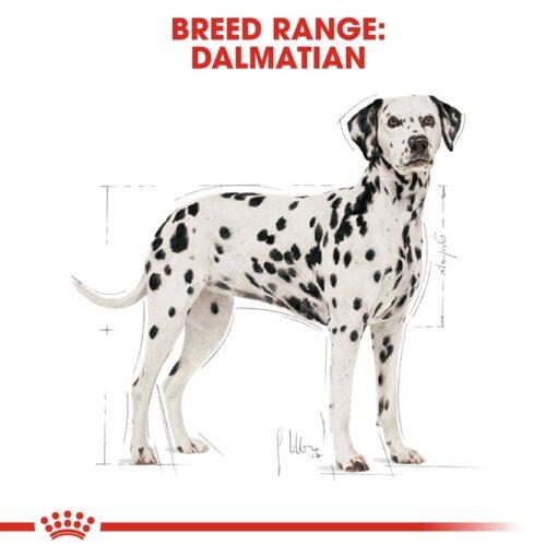 rc bhn dalmatian cv eretailkit 1 - Royal Canin - Breed Health Nutrition Dalmatian Adult