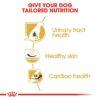 rc bhn dalmatian cv eretailkit 3 - Royal Canin - Breed Health Nutrition Dalmatian Adult