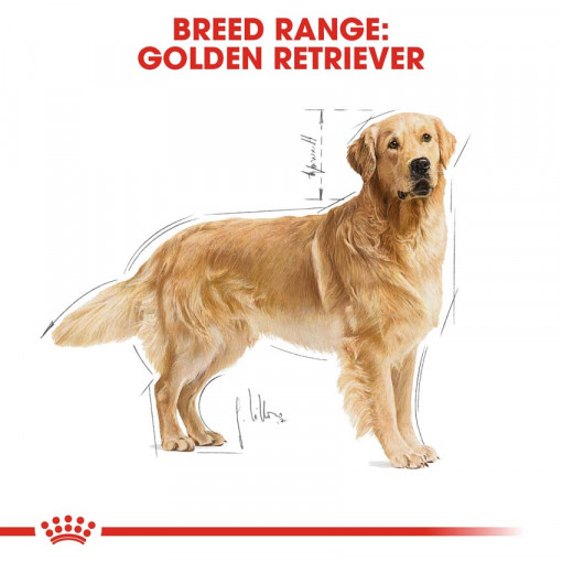 rc bhn goldenretriever cv eretailkit 1 - Royal Canin - Breed Health Nutrition Golden Retriever Adult