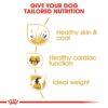 rc bhn goldenretriever cv eretailkit 3 - Royal Canin - Breed Health Nutrition Golden Retriever Adult