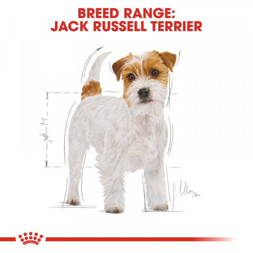 rc bhn jackrussell cv eretailkit 1 - Royal Canin - Breed Health Nutrition Jack Russell Adult