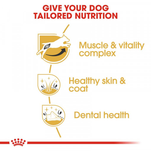 rc bhn jackrussell cv eretailkit 3 - Royal Canin - Breed Health Nutrition Jack Russell Adult