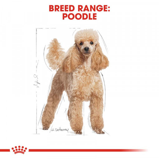 rc bhn poodle cv eretailkit 1 - Royal Canin - Poodle Adult