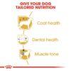 rc bhn poodle cv eretailkit 3 - Royal Canin - Poodle Adult