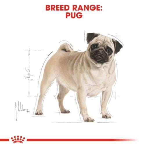 rc bhn pug cv eretailkit 1 - Royal Canin - Breed Health Nutrition Pug Adult