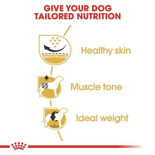 rc bhn pug cv eretailkit 3 - Royal Canin - Breed Health Nutrition Pug Adult