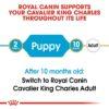 rc bhn puppycavalierkingcharles cv eretailkit 1 - Royal Canin - Breed Health Nutrition Cavalier King Charles Puppy