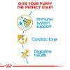 rc bhn puppycavalierkingcharles cv eretailkit 3 - Royal Canin - Breed Health Nutrition Cavalier King Charles Puppy