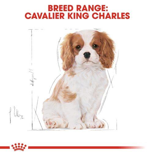 rc bhn puppycavalierkingcharles cv eretailkit 4 - Royal Canin - Breed Health Nutrition Cavalier King Charles Puppy