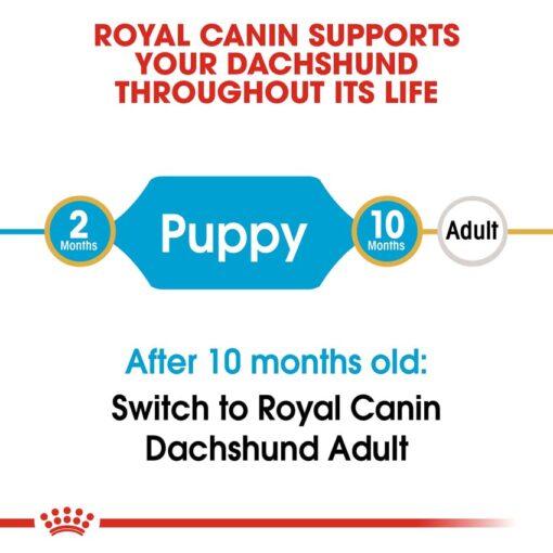 rc bhn puppydachshund cv eretailkit 1 - Royal Canin - Dachshund Puppy