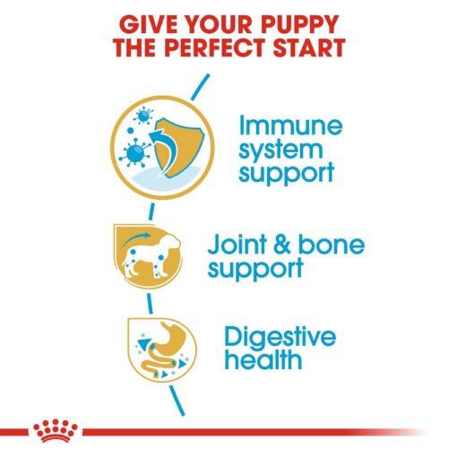 rc bhn puppydachshund cv eretailkit 3 - Royal Canin - Dachshund Puppy