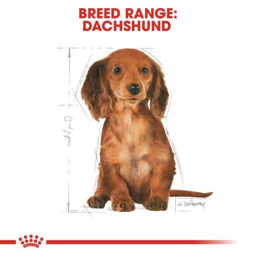 rc bhn puppydachshund cv eretailkit 4 - Royal Canin - Dachshund Puppy