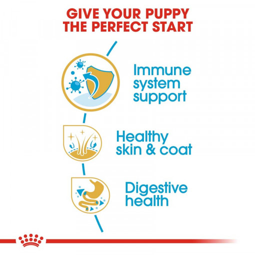rc bhn puppygoldenretriever cv eretailkit 3 - Royal Canin - Breed Health Nutrition Golden Retriever Puppy