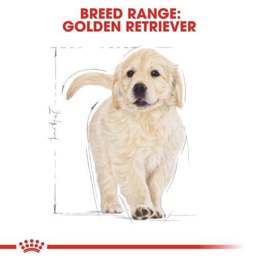 rc bhn puppygoldenretriever cv eretailkit 4 - Royal Canin - Breed Health Nutrition Golden Retriever Puppy