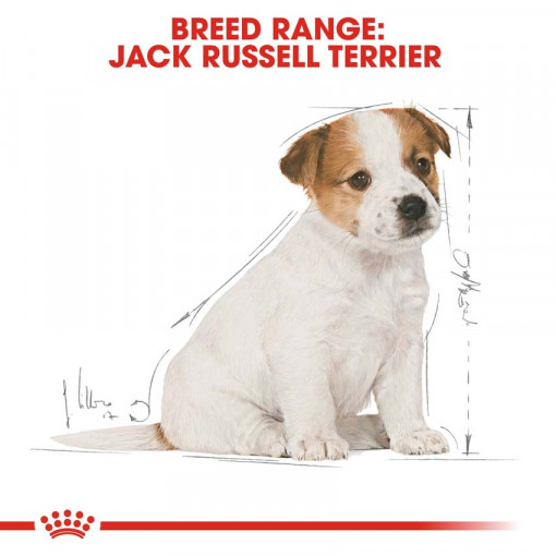 rc bhn puppyjackrussell cv eretailkit 4 - Royal Canin - Breed Health Nutrition Jack Russell Puppy