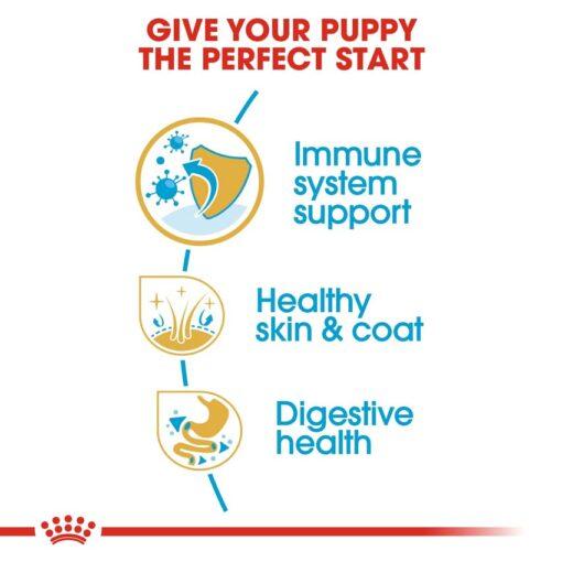 rc bhn puppyshihtzu cv eretailkit 3 - Royal Canin - Shih Tzu Puppy