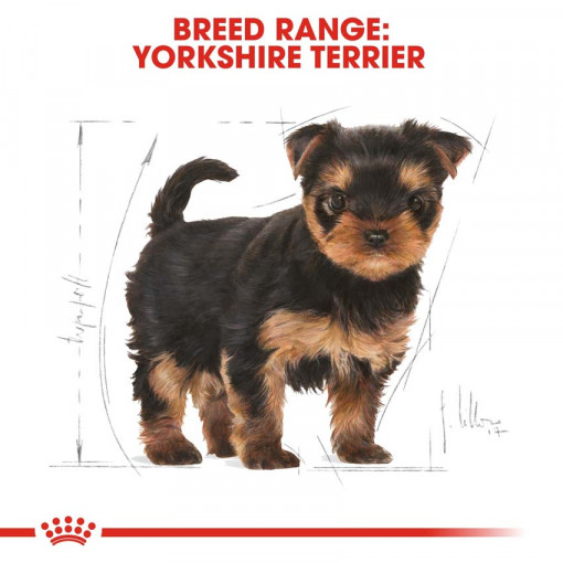 rc bhn puppyyorkshire cv eretailkit 4 - Royal Canin - Breed Health Nutrition Yorkshire Puppy