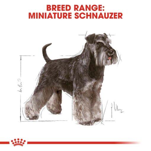 rc bhn schnauzer cv eretailkit 1 - Royal Canin - Breed Health Nutrition Miniature Schnauzer Adult