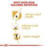 rc bhn schnauzer cv eretailkit 3 - Royal Canin - Breed Health Nutrition Miniature Schnauzer Adult
