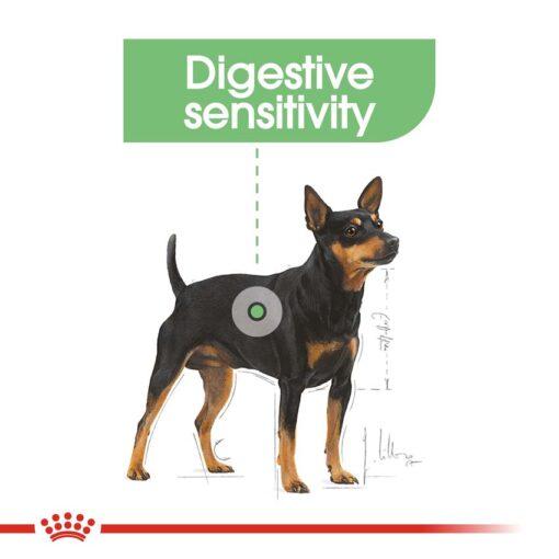 rc ccn digestivemini cv eretailkit 2 - Royal Canin - Canine Care Nutrition Mini Digestive Care