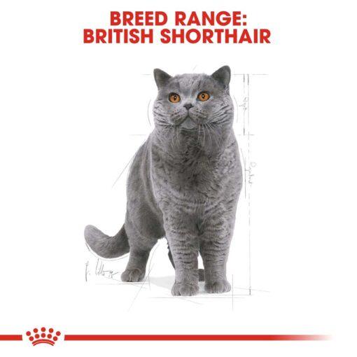 rc fbn britishsh cv eretailkit 1 - Royal Canin - Feline Breed Nutrition British Shorthair