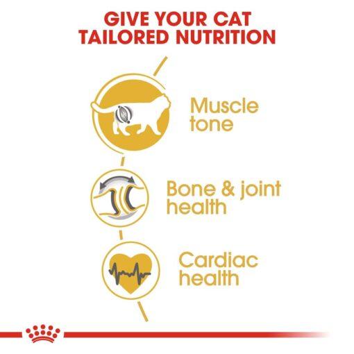rc fbn britishsh cv eretailkit 3 - Royal Canin - Feline Breed Nutrition British Shorthair