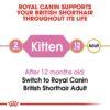 rc fbn kittenbritishshorthair cv eretailkit 1 - Royal Canin - Feline Breed Nutrition British Shorthair Kitten