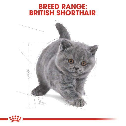 rc fbn kittenbritishshorthair cv eretailkit 4 - Royal Canin - Feline Breed Nutrition British Shorthair Kitten