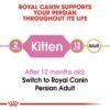 rc fbn kittenpersian cv eretailkit 1 - Royal Canin - Feline Breed Nutrition Kitten Persian