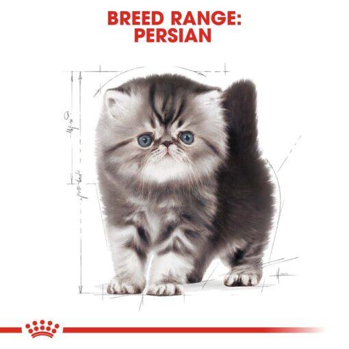 rc fbn kittenpersian cv eretailkit 4 - Royal Canin - Feline Breed Nutrition Kitten Persian