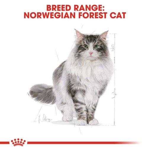 rc fbn norwegianfc cv eretailkit 1 - Royal Canin Feline Breed Nutrition Norwegian Forest Cat