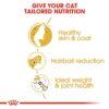 rc fbn norwegianfc cv eretailkit 3 - Royal Canin Feline Breed Nutrition Norwegian Forest Cat