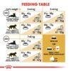 rc fbn norwegianfc cv eretailkit 5 - Royal Canin Feline Breed Nutrition Norwegian Forest Cat