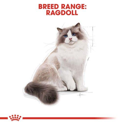 rc fbn ragdoll cv eretailkit 1 - Royal Canin - Feline Breed Nutrition Ragdoll