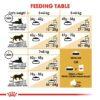 rc fbn ragdoll cv eretailkit 5 - Royal Canin - Feline Breed Nutrition Ragdoll