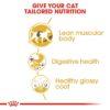 rc fbn siamese cv eretailkit 3 - Royal Canin - Feline Breed Nutrition Siamese