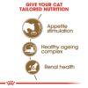 rc fhn ageing12 cv eretailkit 2 - Royal Canin - Feline Health Nutrition Ageing +12 Years