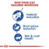 rc fhn indoorlonghair cv eretailkit 2 - Royal Canin - Feline Health Nutrition Indoor Long Hair