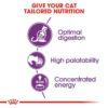 rc fhn sensible33 cv eretailkit 2 - Royal Canin - Feline Health Nutrition Sensible