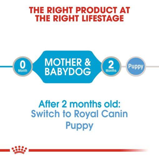 rc shn wet startermousse cv eretailkit 1 - Royal Canin - Canine Health Nutrition Starter Mousse