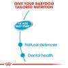 rc shn wet startermousse cv eretailkit 2 - Royal Canin - Canine Health Nutrition Starter Mousse
