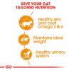INTENSE BEAUTY JELLY 04 - Royal Canin - Feline Care Nutrition Intense Beauty Jelly